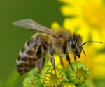 Intensive land use may reduce pollination and reproductive success of wild plants
