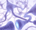 Researchers identify mechanism that prevents death of neurons