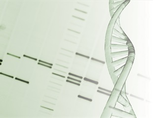 First real-time observation of DNA-histone interactions