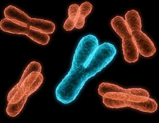 Study addresses mystery of how chromosomes are inherited during cell division