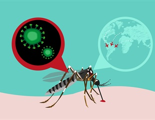 Study finds a correlation between zika-induced neurological complications and Gas6 protein