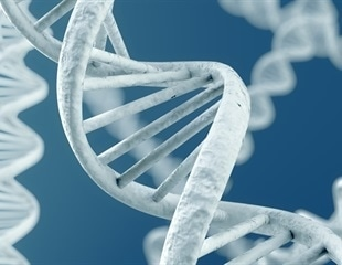 Researchers seek to point a way toward a unified theory for DNA folding