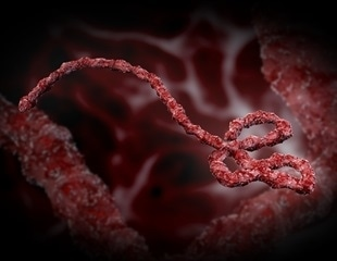 New cellular pathway can protect cells from infection by Ebola virus, coronavirus