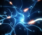 Research identifies how neuronal transmission is disrupted in ALS