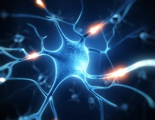 Researchers discover a new mechanism to regulate nerve impulses