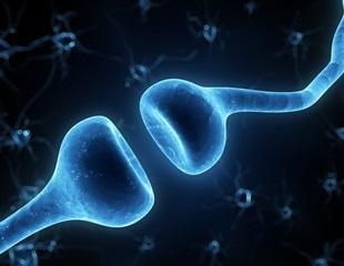 KAIST researchers identify mechanism underlying plasticity in adult brains