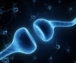 Study shows cocaine use in mice leads to formation of synapses