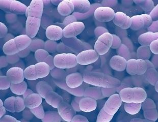 Gene expression database sheds light on pneumococcal infection