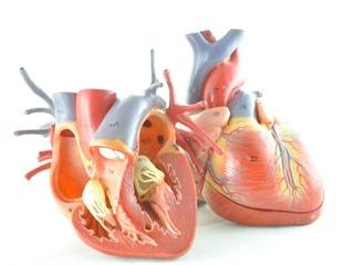 Research reveals link between high-fat diet, gut microbiota and cardiovascular disease