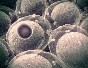 Simple 'designer' pore reproduces selective cellular transport mechanisms