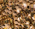 Genomes provide insights into fig-wasp coevolution