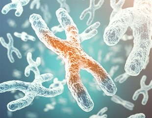 Study uncovers unusual sex chromosomes of Australian iconic animals