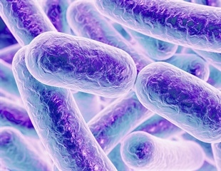 Gut bacteria may play a key role in neurological damage of premature infants