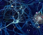 Electrical trigger sites in the brain change with experience, shows study