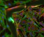 Avoiding Cell Death in Fluorescence Microscopy