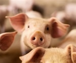 Three plausible solutions mitigates zoonotic risk associated with intensive animal agriculture