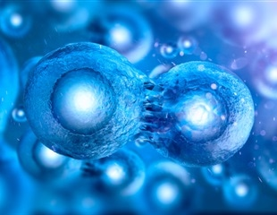 Researchers develop novel cell reprogramming strategy to slow down glioblastomas