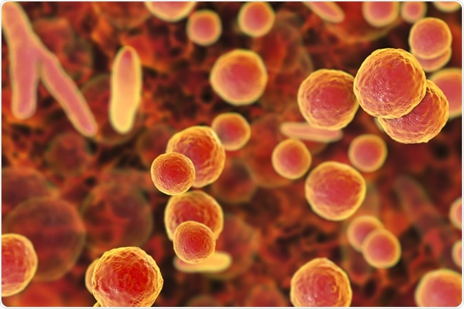Mycoplasma bacteria, 3D illustration showing small polymorphic bacteria which cause pneumonia, genital and urinary infections - Illustration Credit: Kateryna Kon / Shutterstock