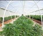 Best Practices for Cannabis Cultivation: A Meta-Analysis