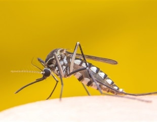 Scientists use genomics to track the outbreak of Yellow fever virus in São Paulo