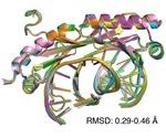 Scientists explain the role of transcription factors in genetic diseases
