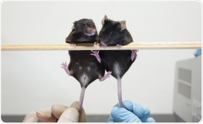 Researchers identify new DNA fragment that forms male sex organs in mice