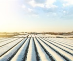 A Guide to Growing Crops in Cold Climates