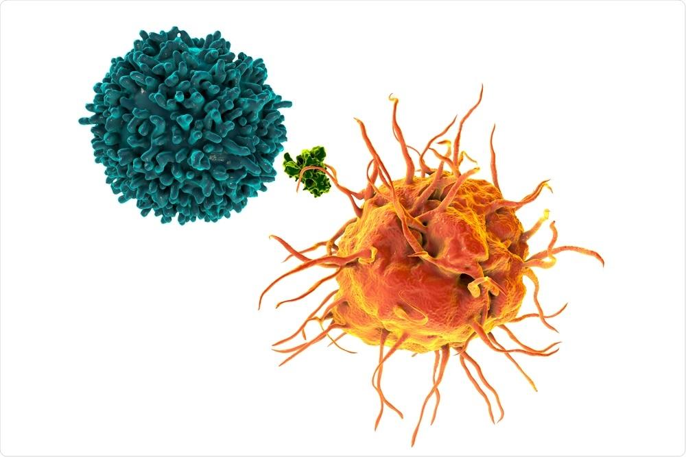 T Cells with antigen