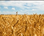 Effect of Light on Wheat Plants