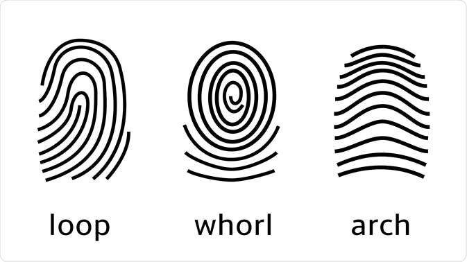 Fingerprint Patterns