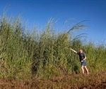 Machine-learning approach helps to detect invasive gamba grass from satellite imagery