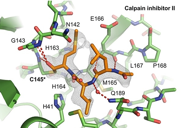 Study may help develop new antiviral drugs against COVID-19