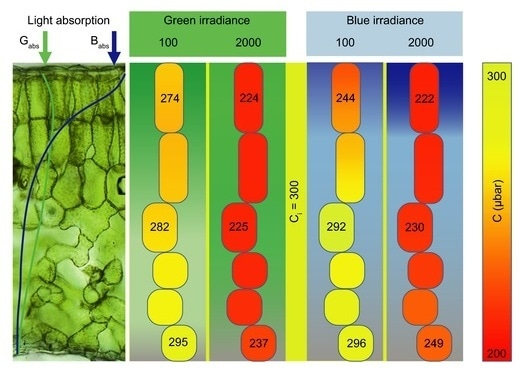 "Researcher creates ""leaf profile"" of components involved in CO2 journey"