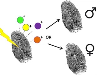 Using mass spectrometry to determine the sex of fingermarks