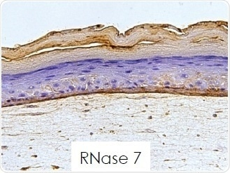 RNase 7