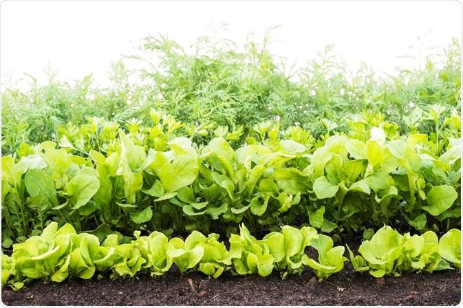 Verdure in Soil