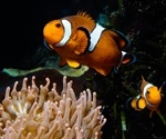 Two brain-signaling molecules control how male anemonefish care for and defend their young