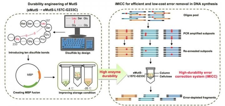 More efficient, cost-effective method for accurate synthesis of DNA
