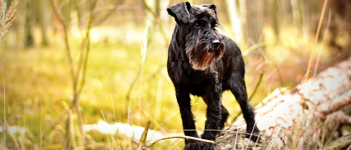 New canine study can benefit diagnostics and treatment of retinitis pigmentosa