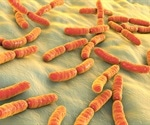 Study discovers hydrogen cycling in the Acetobacterium woodii bacterium