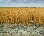 Silica could increase the availability of water to crops