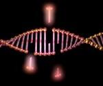 Study reveals key mechanism behind DNA repair processes