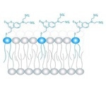 Chemical tools can regulate lipid concentration in living cells