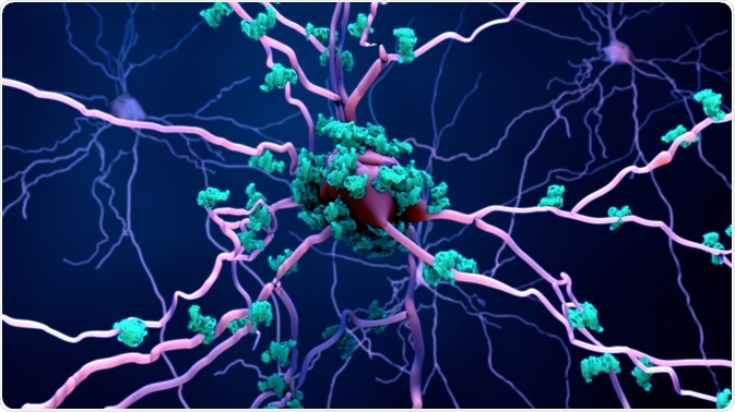 Cell Death of Neurons
