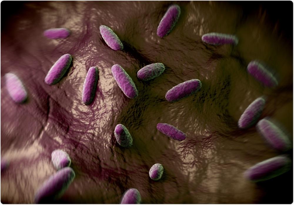 Salmonella Serotype