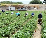 Agricultural Pickers In US To See Unsafely Hot Workdays Double By 2050