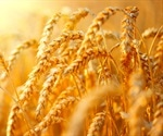 Reference genes could lead to genetic improvement in wheat