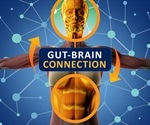 Study shows entire brain responds to gut through neuronal connections