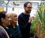 Scientists Take A Step Closer To Heat-Tolerant Wheat