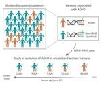 ADHD-associated genetic variants have reduced progressively in human lineage